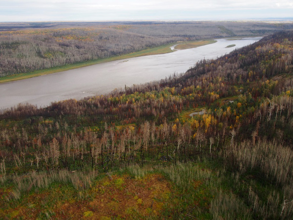 Athabasca River Valley Horse Fire