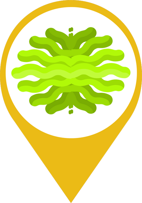 Icon showing a green, cartoon representation of algae